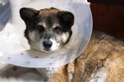 犬の皮膚病について(アレルギー性皮膚炎)