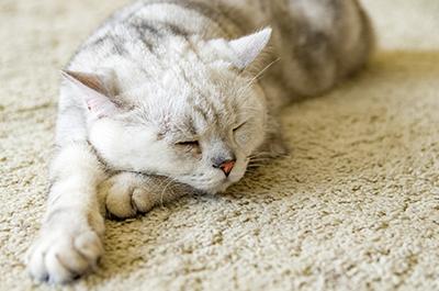 呼吸器感染症(猫風邪)