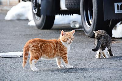 猫免疫不全ウイルス感染症(猫エイズ)