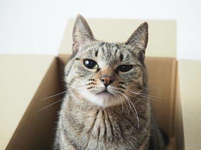 猫の病気の予防について