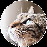 猫の歯周・歯内治療